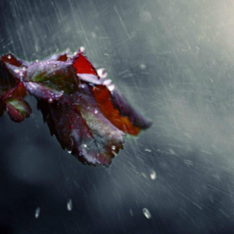 SURPRISINGLIVES.NET/downpour/
