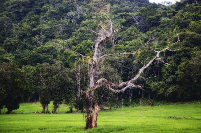surprisinglives.net/costa-rica-happy-place/