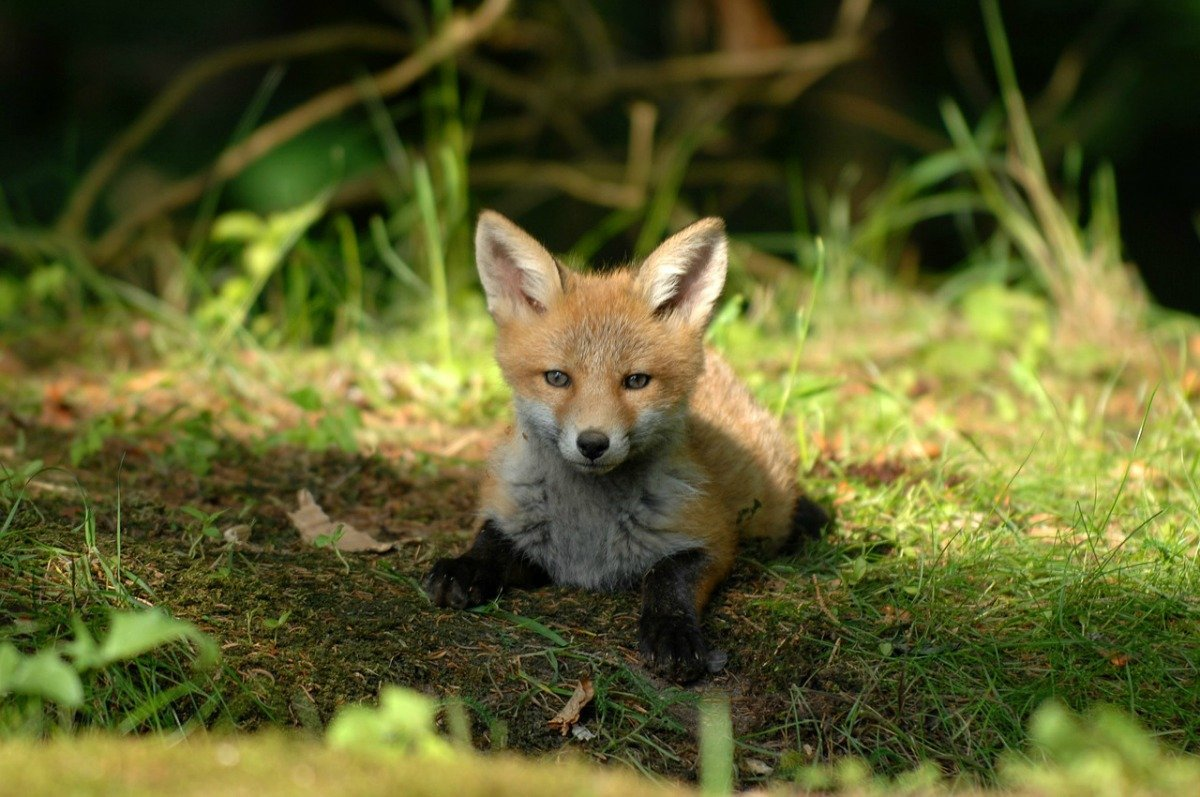 surprisinglives.net/unlikely-fox-photos/