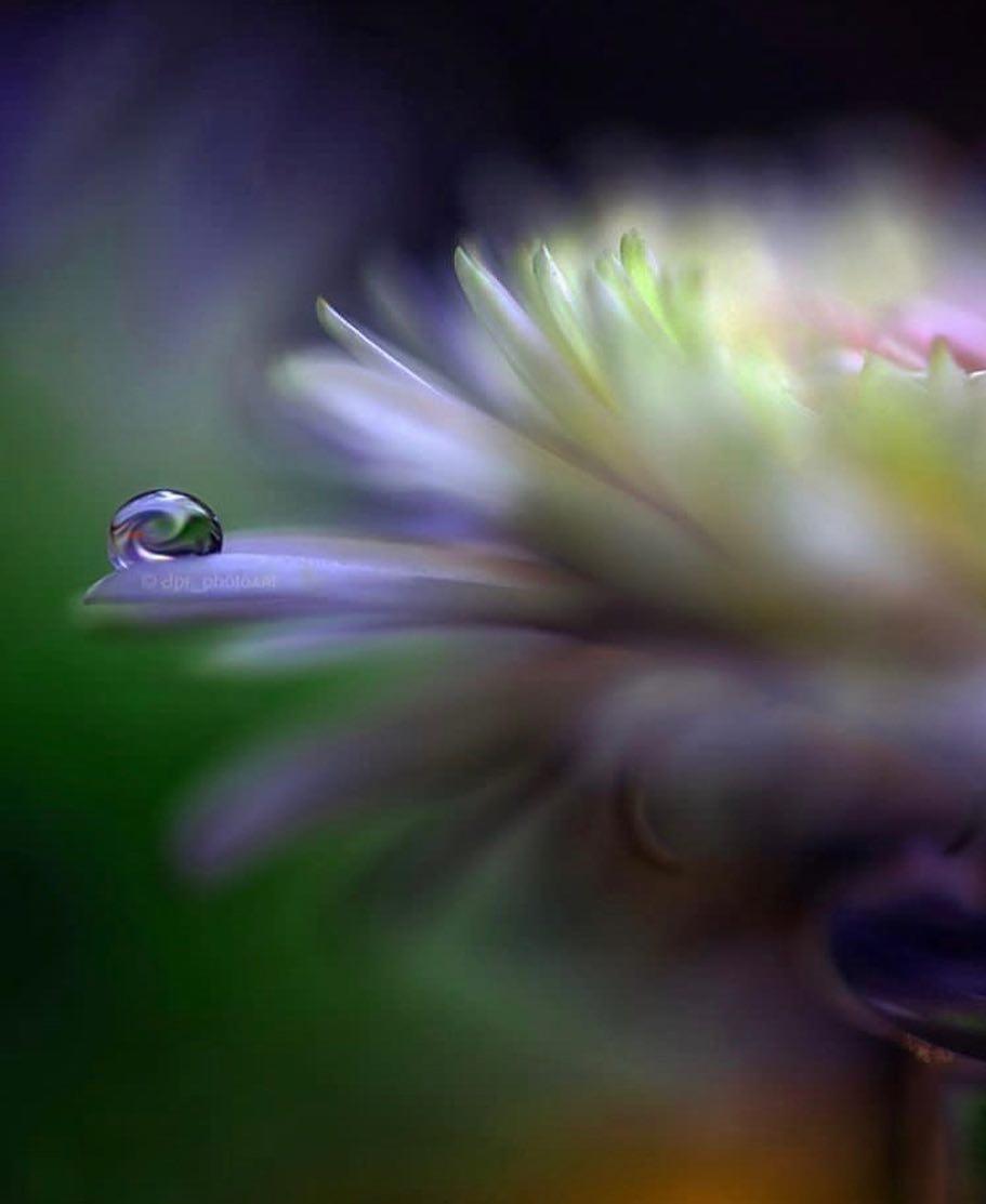 mist macro flowers by surprising lives