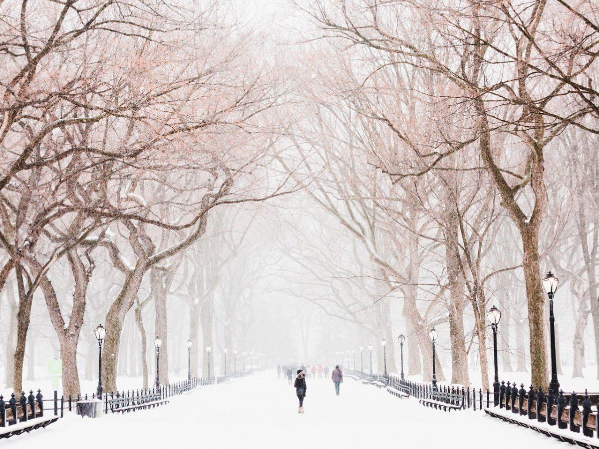 snowy park by surprisinglives.net