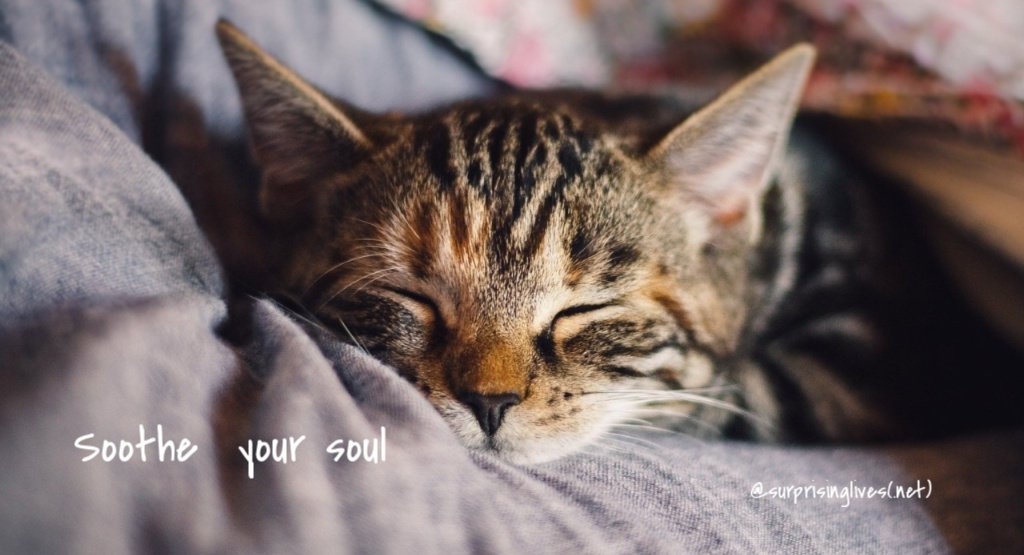 soothe your soul sleeping cat