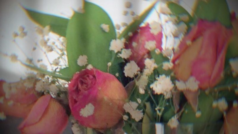 fading pink roses