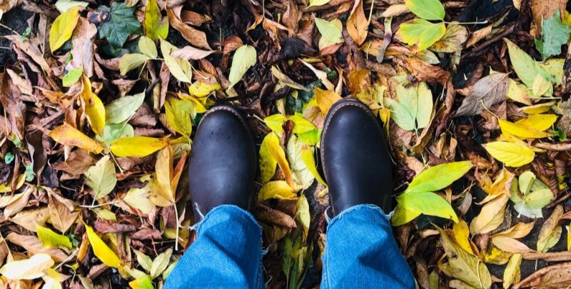 leaves at my feet